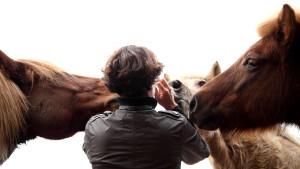 paardenblik